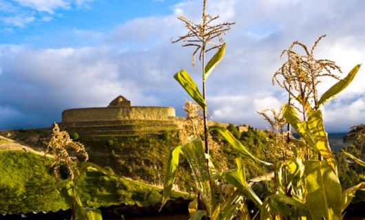Corn in foreground and building in Ingapirca, Peru