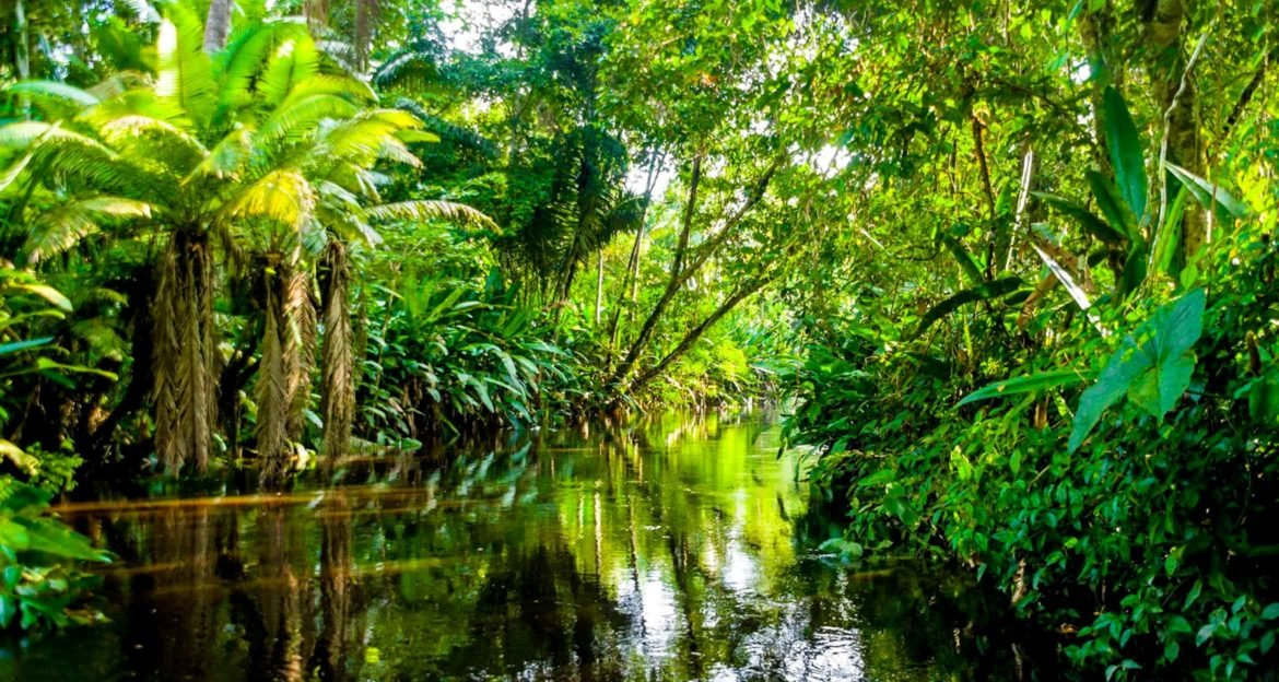 River winding through thick Amazon rainforest