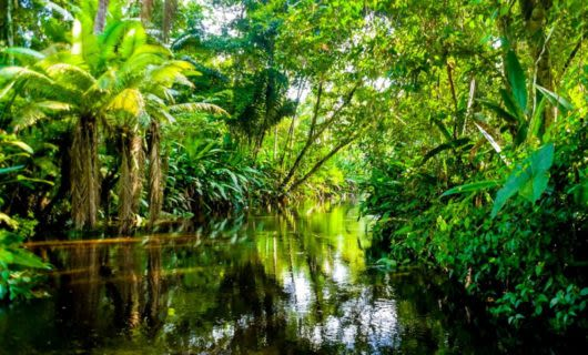 River through thick Amazon jungle