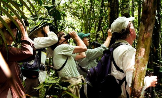 Tour group uses binoculars in jungle