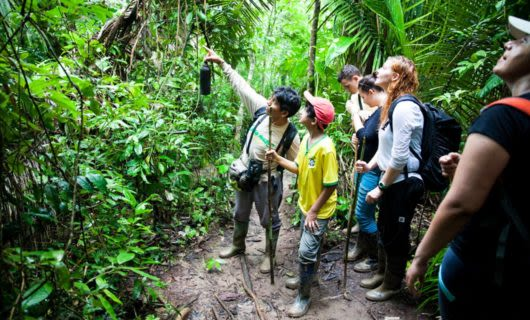 Jungle tour group points into trees