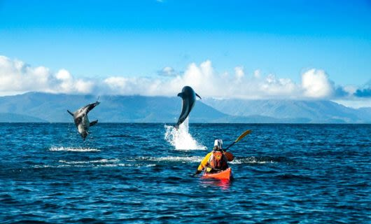 Kayaker paddles toward dolphins jumping out of the water