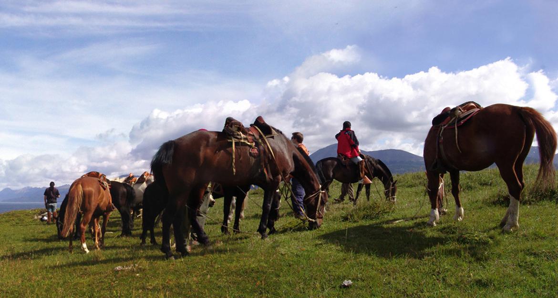lakutaia-lodge-horses-and-viewpoint
