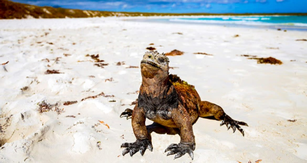 Lizard sits on white sand beach