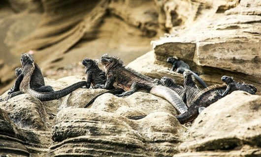 Lizards sitting on a rock