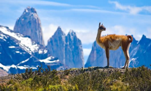 Llama stands on hill near mountains