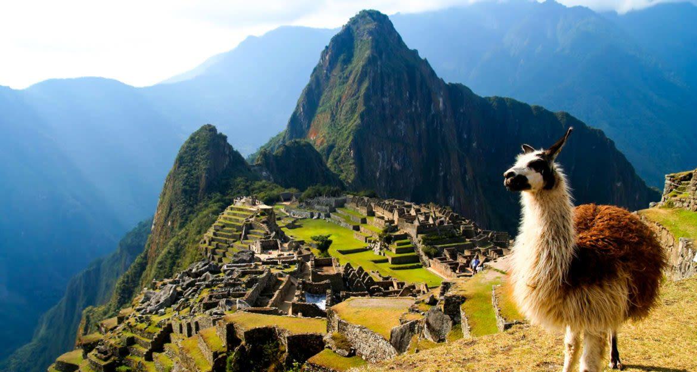 Llama stands in front of Machu Picchu