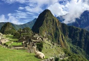 llama resting on Machu Picchu mountain