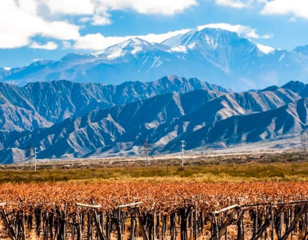 View across vineyard in Mendoza
