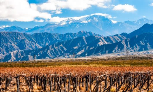 View across vineyard in Mendoza