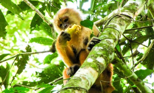 Monkey sitting in tree eating a fruit