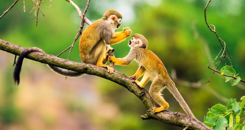 Monkeys sit on a small branch