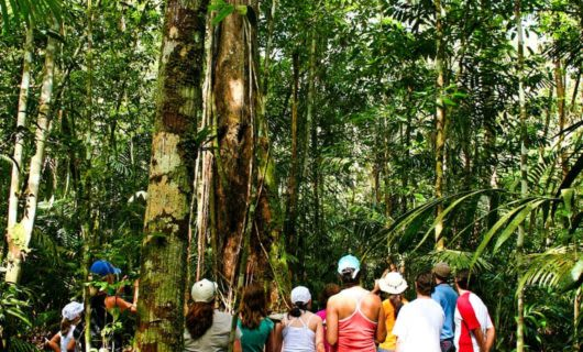 Nature walk group looks up at rainforest trees