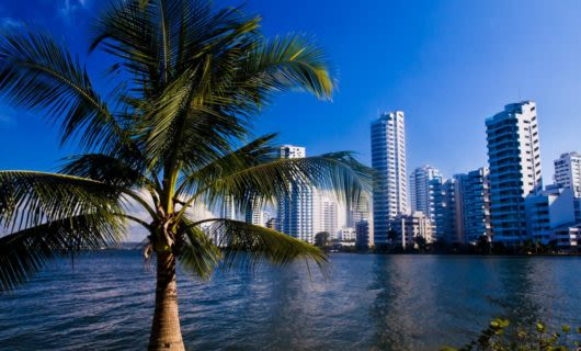Palm tree in front with cityscape behind