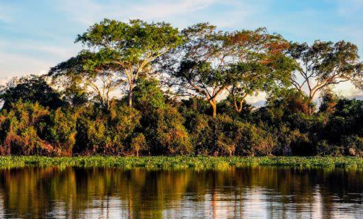 Shoreline of Pantanal river in Brazil