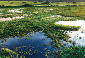 Travel Paraguay and the immense Pantanal Wetlands