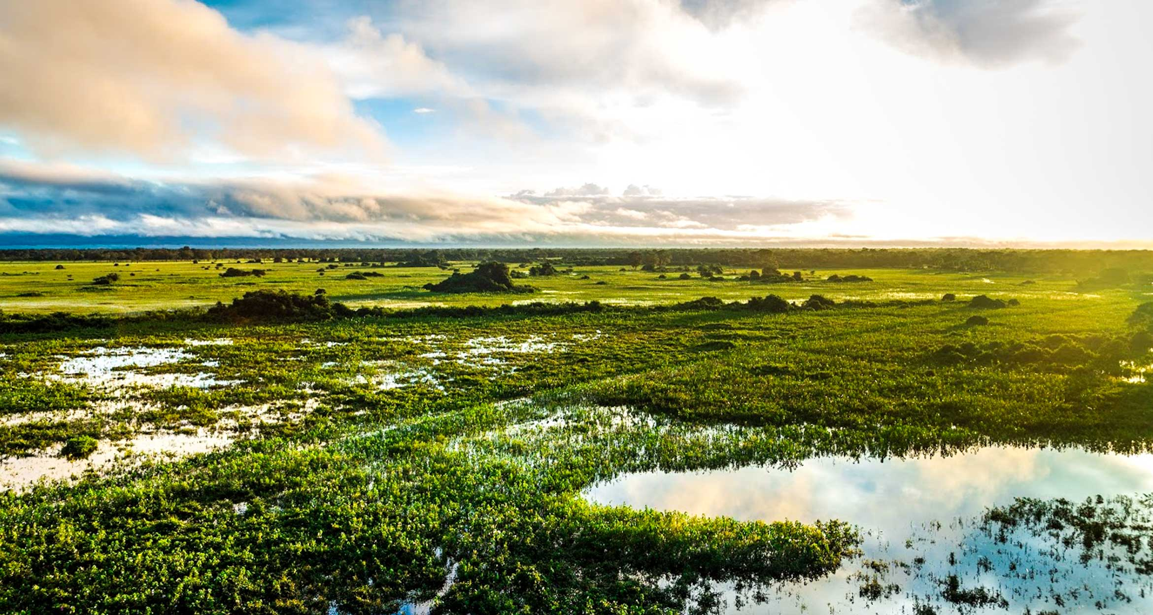 View across wetlands of Pantanal, Brazil