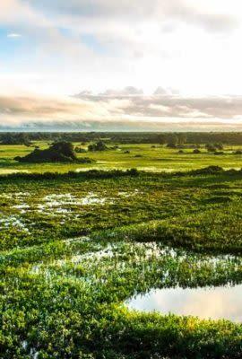 View across wetlands of Pantanal. Brazil Tours often feature exploring this vibrant landscape.