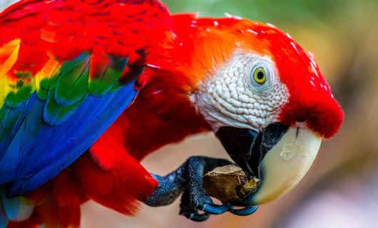Parrot eats root held in claw