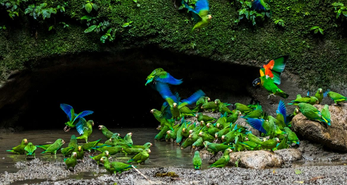 Flock of parrots outside small cave