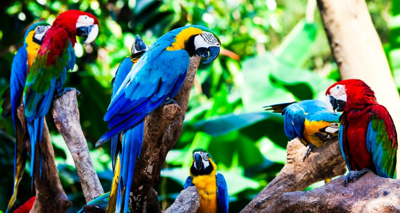 Flock of parrots sit in tree
