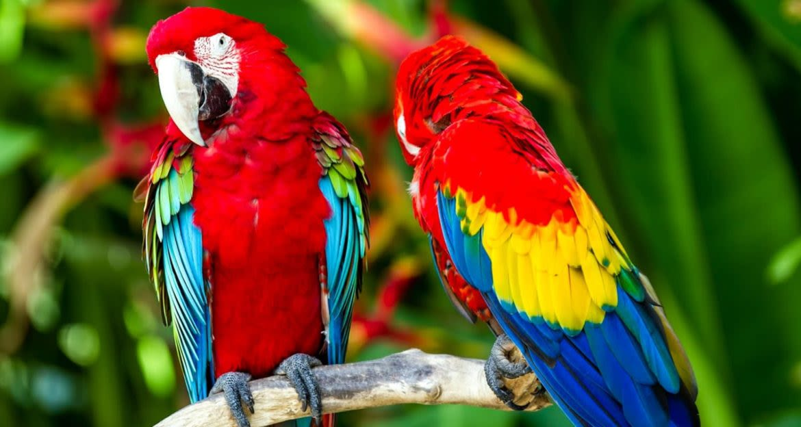 Two parrots sit on branch