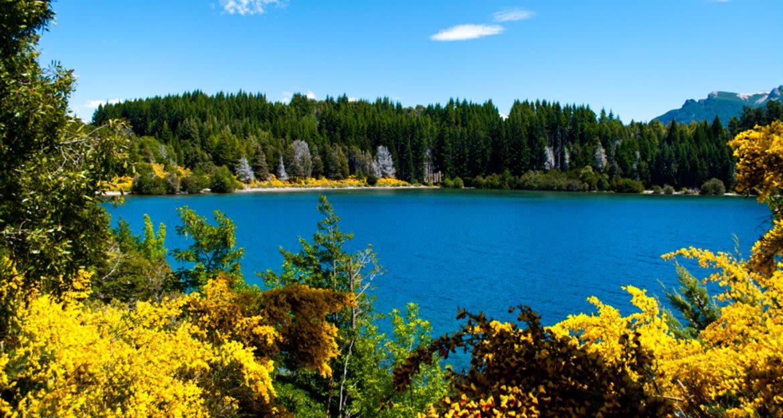 View through trees of Patagonia lake