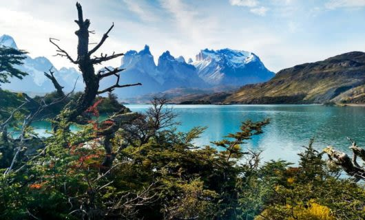 View past scrubby trees of Patagonia mountains