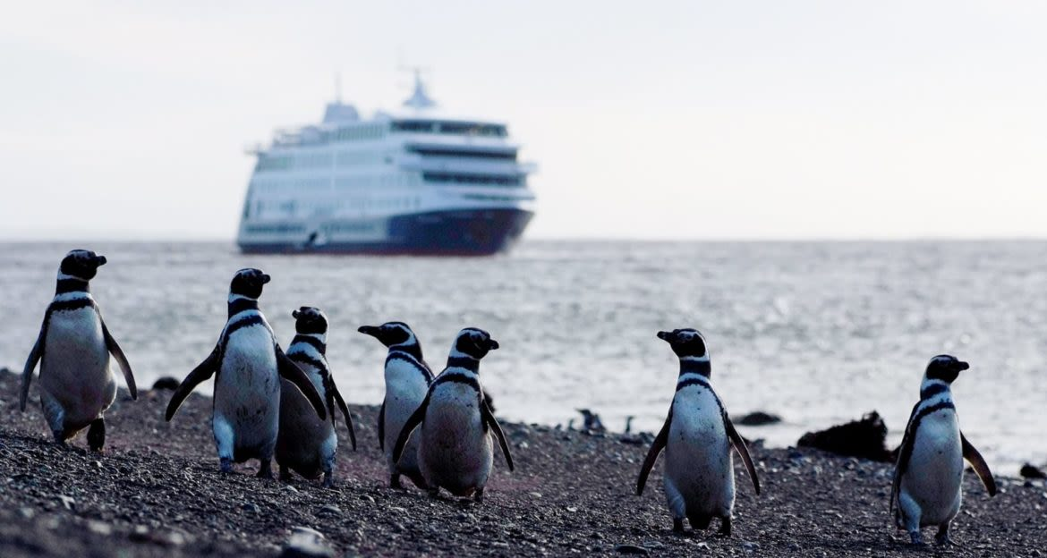 Cruise ship in background of penguin group on shore
