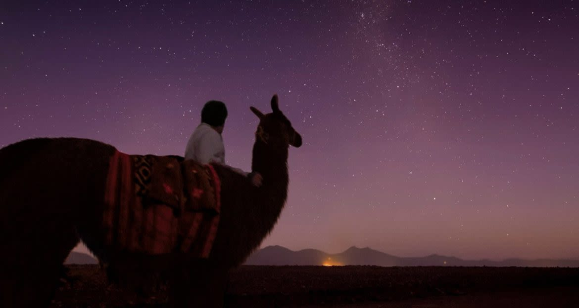 Person and llama stand in front of starry sky