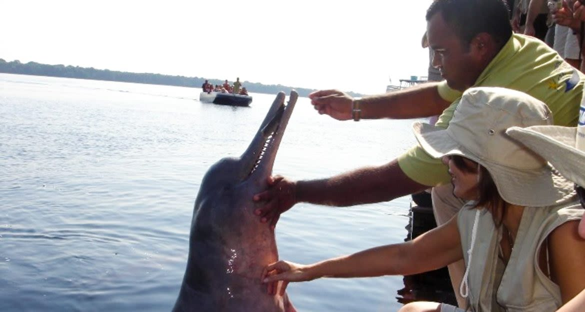 Group of travelers feed dolphin over edge of ship