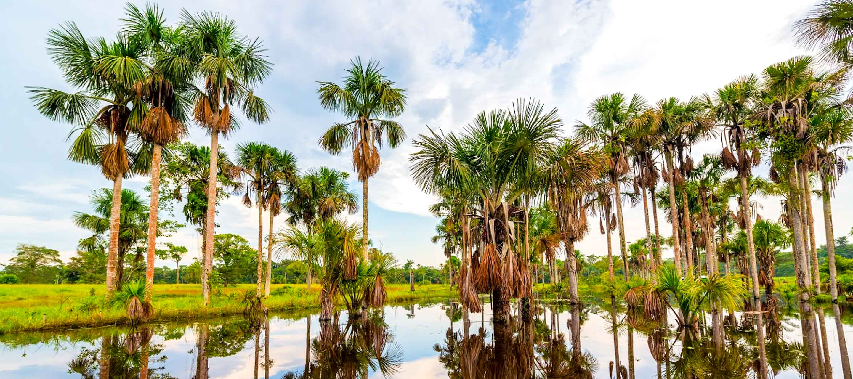 Colombia Rainforest and towering palm trees over pond