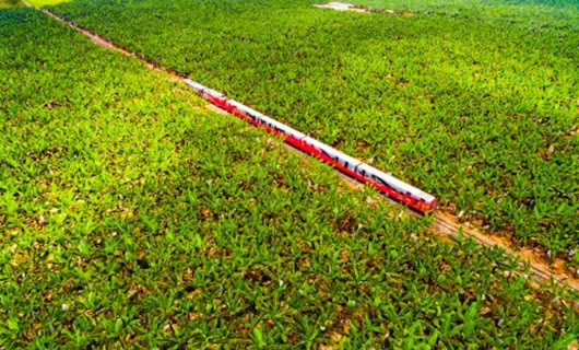 Aerial view of red train in crop field