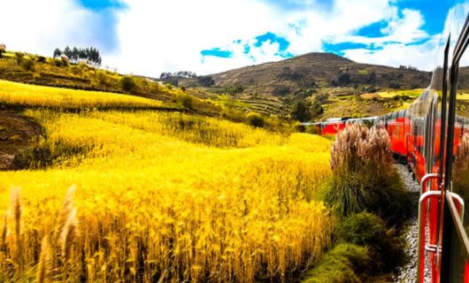 Side view of red train and wheat field
