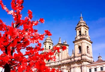 Red leafed tree in front of church in Bogota Colombia