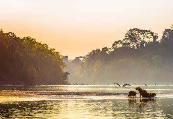 Sunset over Amazon river full of wildlife