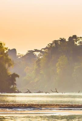 Sunset over Amazon river full of wildlife
