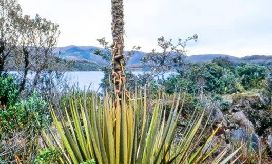 Plants on rocky shore near lake