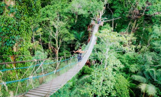 Aerial view of woman crossing jungle rope bridge