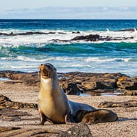 sea lion sitting on beach