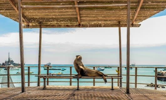 Seal sits on bench in beach gazebo