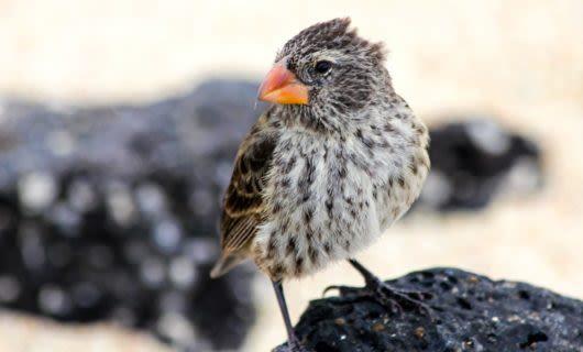 Small bird sits on black rock
