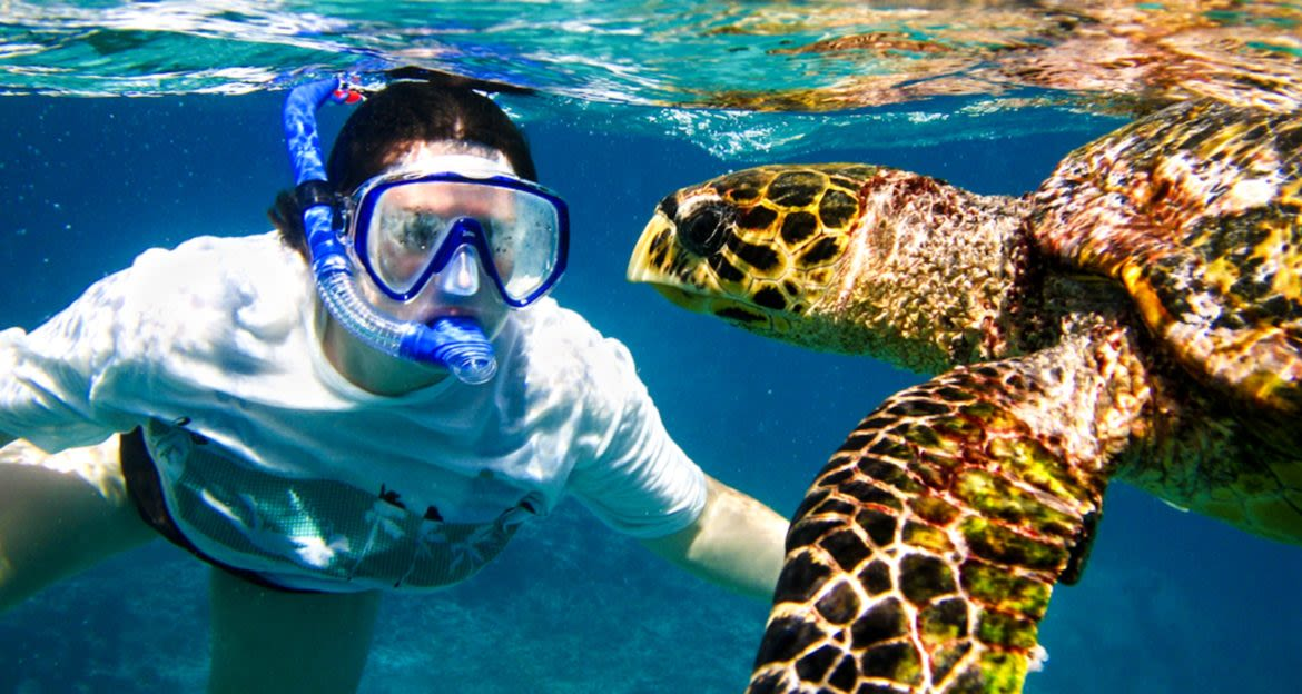 Traveler snorkels with sea turtles