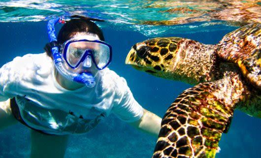 Traveler snorkels with sea turtles