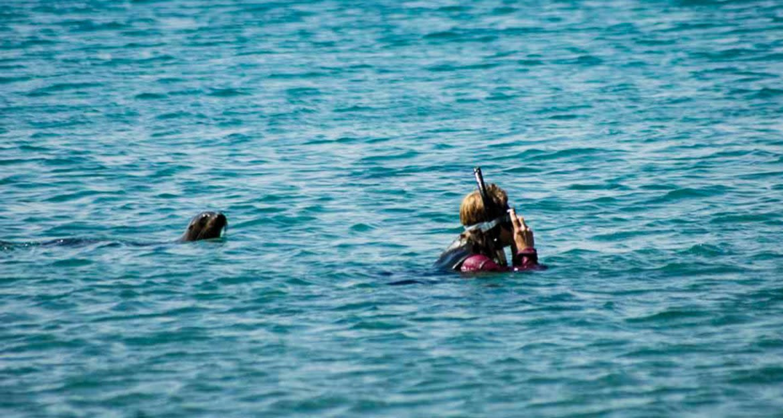 Snorkeling traveler is followed by seal
