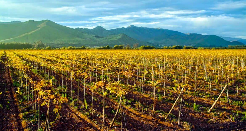 South America vineyard at sunset