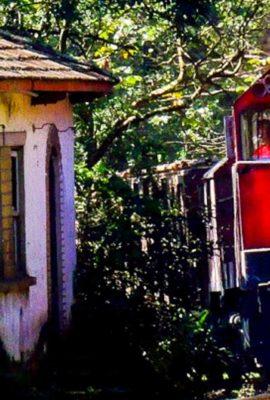 train voyaging through dense rainforest