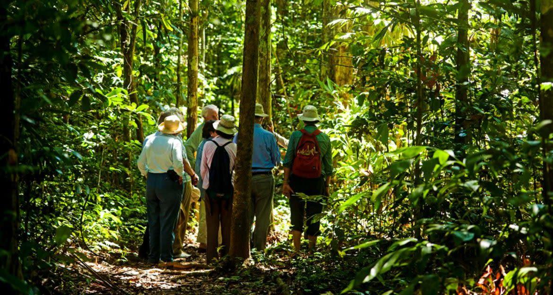 Travelers walk through forest