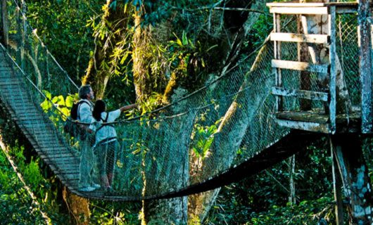 Travelers stand in middle of jungle rope bridge