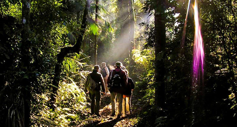 Travelers walk through jungle